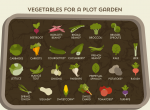Grow your own - how to cultivate your own vegetable patch