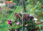 Winter Planters - how to keep your Winter garden colourful
